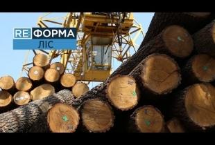 Хто знищує українські ліси? RE:ФОРМА