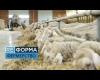 15 років без землі. Як працюють українські фермери